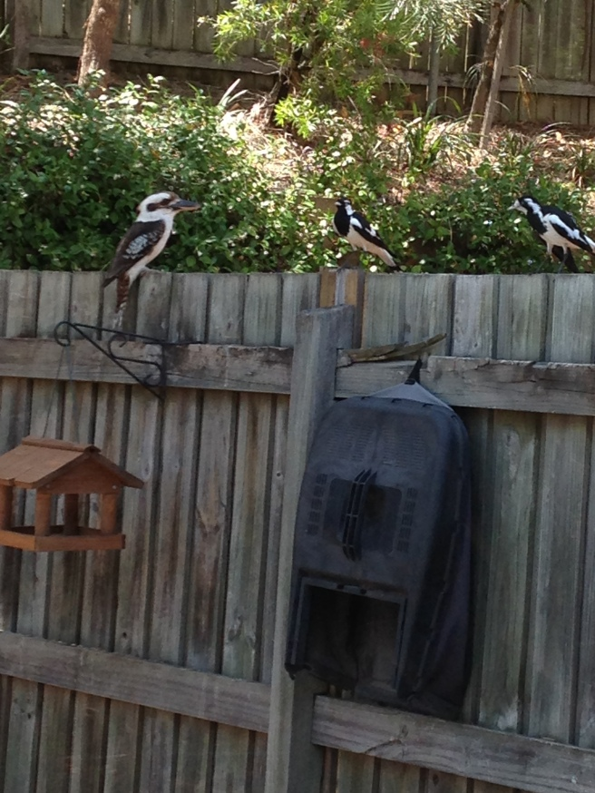A Kookaburra and a Peewee dropped in for a well needed drink.